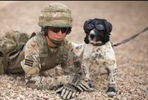 Four-legged heroes / 1st Military Working Dog Regiment plays a pivotal role in supporting a number of key activities including; counter insurgency operations, the detection of Improvised Explosive Devices, assistance in the searching of routes, buildings and vehicles, enhancing security and patrolling key installations. Find out more: http://www.army.mod.uk/medical-services/veterinary/30499.aspx