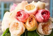 Petals & Gems / The purest and most thoughtful minds are those which love color the most. - John Ruskin
