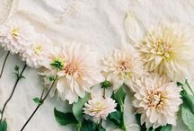 flores. / All things floral   my garden   inspiration   design   dreams