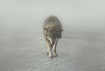 Hungry like a wolf / by Fabio Rigamonti