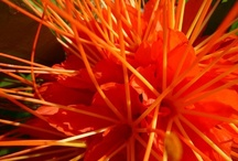 ° Orange Zing °