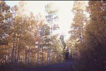 fall things / by KYLIE LYNN