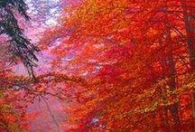 Fall / by Christina Walsh