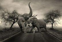 Elephants<3 / by Megan Huston