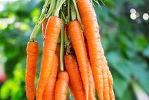 Karotten, Möhren Rezepte - Carrot recipes / Kochen und backen mit Karotten.  Kuchen, Suppen, Aufläufe, Dessert