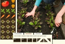 Wellness: Vegetable Garden Plans