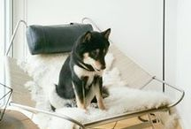 Dogs on Furniture / Cute dogs sometimes falling asleep while still standing and other times getting stuck inside of things. This board is dedicated to all the dogs and cats getting comfy and making themselves at home.  / by Rove Concepts