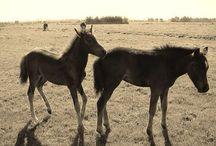 Paarden / Paarden plaatjes die ik mooi vind