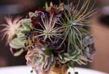 Flower eco&organic