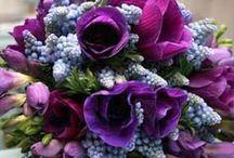 color wedding purple