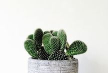 Plants / From tiny succulents and cacti to towering indoor house plants, exercise your green thumb and get a fresh look for your home with inspiration from our lush and lively green board! / by Rove Concepts
