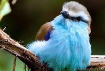 Ptaki i ich budki