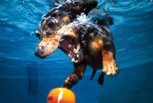 chiens sous l'eau