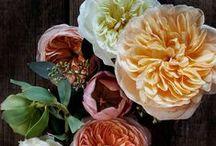 "**""Just Beautiful Flowers""!!! / by Nancy Neupert"