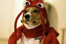 déguisements d'animaux !!!!! :) :)