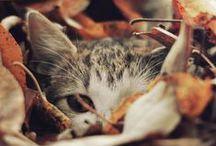 GATTI*CATS / purrrrr