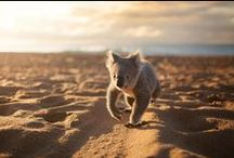 Australia / All things Aussie / by Ariane Poole Cosmetics
