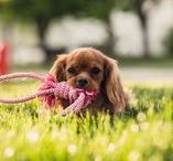 Pet Accessories / The best dog pet accessories to keep your pet stylish and entertained!
