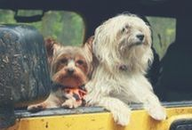 Traveling with Dogs / Traveling with your dog can be a hassle but not with our tips & advice!