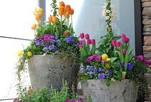 Hage / Utemøbler, beplanting.