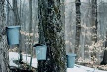 Maple Syrup & Other Natural Sugars / by Ken