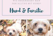 DOG - HUND - unser Leben mit Bommel & Hugo! #havaneser #doglove / Hier geht es um unseren Alltag mit Hund. Ab sofort sogar mit 2 Hunden, denn ein weiterer Welpe zieht ein. Erziehung, Futter, Spaß...einfach alles, was mit dem besten Freund eines Menschen zu tun hat. Bommel und Hugos sind übrigens Havaneser.