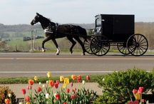 ~ AMISH ~ / by Margie Hattaway