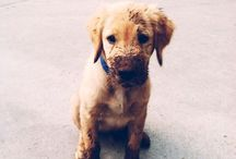 Södet koirat