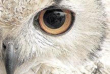 Owl / Sowy takie tajemnicze stworzenia zawsze mnie inspirowały...