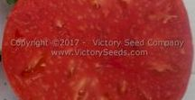 """New for 2018 / This is just a highlight of the """"new"""" old varieties that we have made available on the site for 2018. Some are rare and the seeds are therefore in very short supply. For a full listing of all the new varieties for 2018, visit http://www.victoryseeds.com/new.html."""