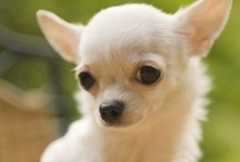 I Love DOGS!!! / by Kim Hattox