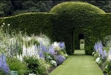 garden / by Deborah C