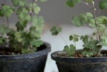St. Patrick's Day / From hops to shamrocks, these ideas will have you covered on this green holiday.