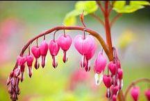 FLORAL INSPIRATION / El arte floral está en auge. El concepto de dónde albergar plantas está re-definiéndose. Basta un frasquito, un macetero colgando del techo con la planta boca abajo... ¿Por qué no llevar esa revolución inspiradora a tu casa? ¡Rompe los moldes!