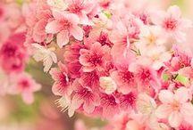 PRIMAVERA / Los colores, accesorios decorativos y la inspiración propia de una temporada exultante!