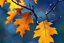 OTOÑO / La bajada de las temperaturas y la caída de las hojas influyen en cómo acondicionamos nuestro hogar para esta temporada. Aquí encontrarás un poco de inspiración otoñal.