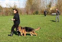 Junior Class II 2014 / La seconda edizione del Junior Class 2014, con l'educatore cinofilo Alberto Castello. / The second edition of Junior Class in 2014, with our resident dog trainer Alberto Castello