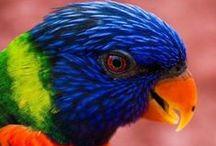Aves e Pássaros / tudo sobre estes bichos / by Auri Luis Martini