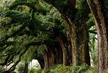 Nature Travel