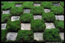 Video / Video's over Japanse tuinen
