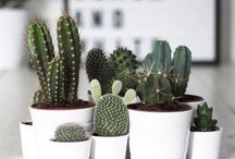 • h o m e | house plants •