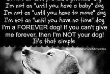 Adopt  / Dog Adoption / by Jo Ann Kemberling