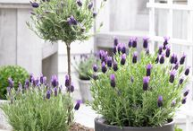 Garden / Gardening, planting, decorating of flower pots, houseplants, herbs...