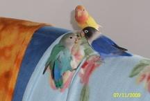 Parrots / Lovebirds, budgies, aras, conurs, grey african etc...simply parrots!