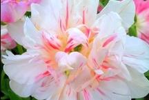 My flowers ;)