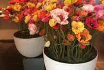 Silkka flowers for life.. / Zijden Kunstplanten en kunstbloemen, niet van echt te onderscheiden en verkrijgbaar bij Pieters Zevenbergen