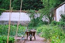 Zahrada. / Garden.