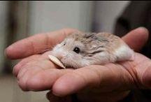 Cute animals~ / Yay!