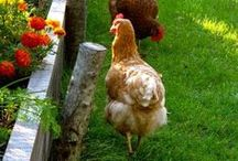 Na dvoře. / Farming.