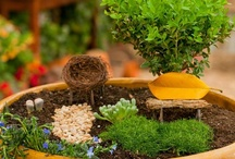 Fairy Gardens and Miniature Worlds